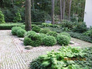 Ogrod lesny rosliny