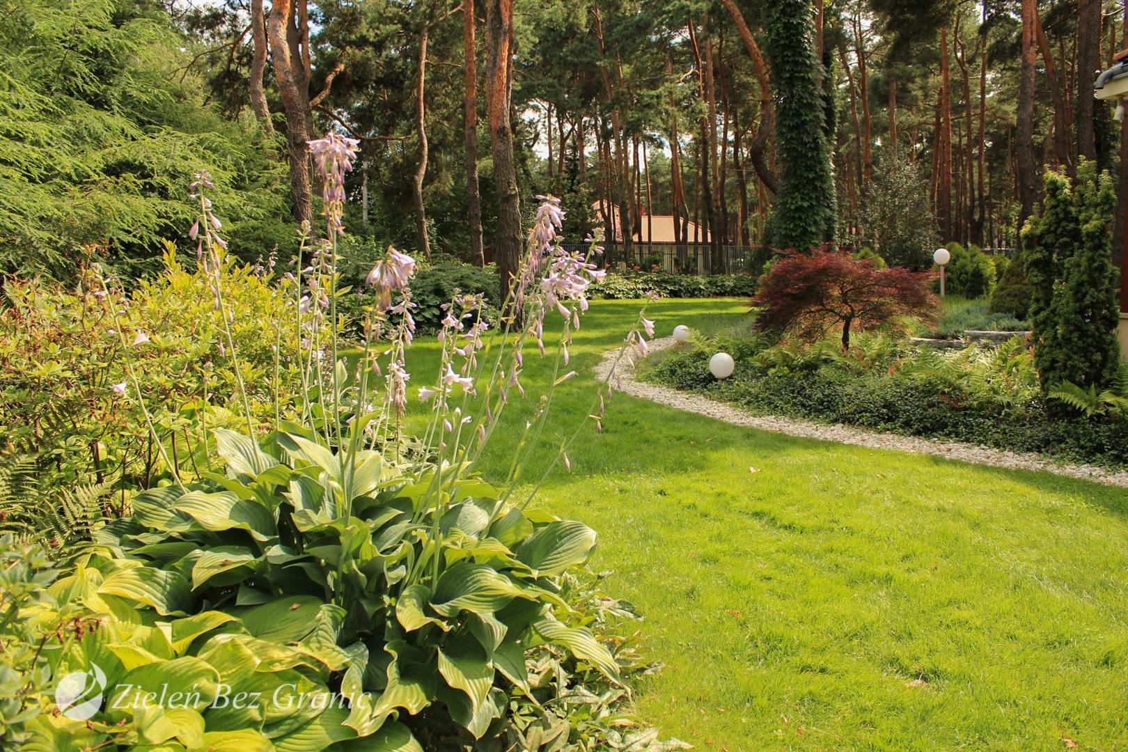 Ogród obfituje w różnokolorowe funkie.