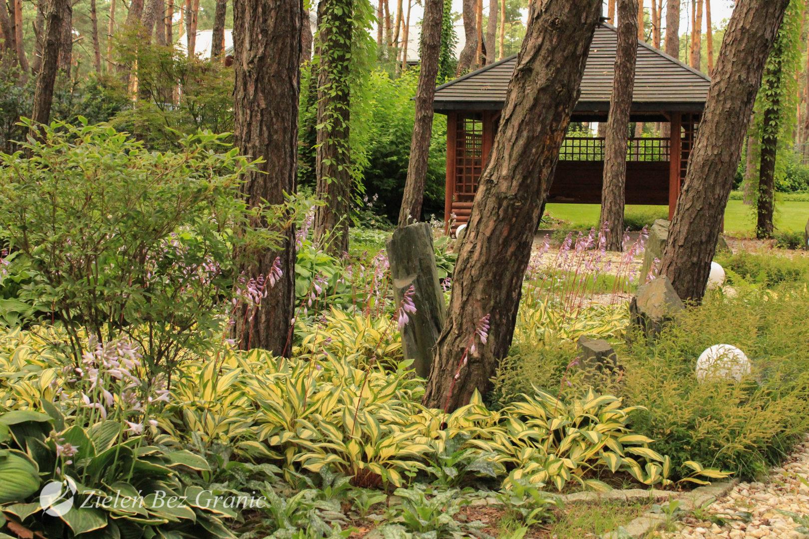 Rabata leśna w ogrodzie przydomowym.