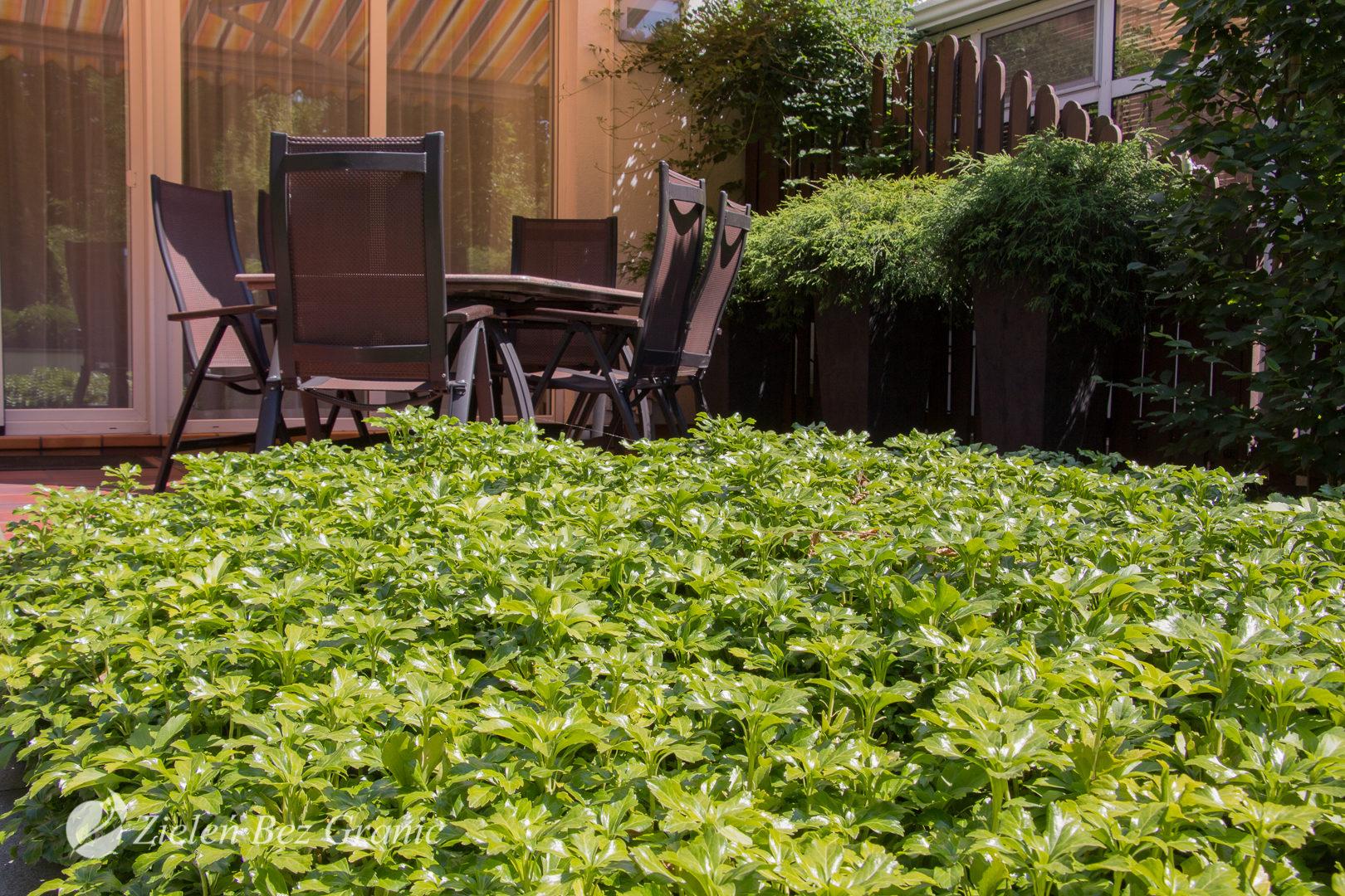 Zastosowanie roślinności okrywowej zamiast trawnika.