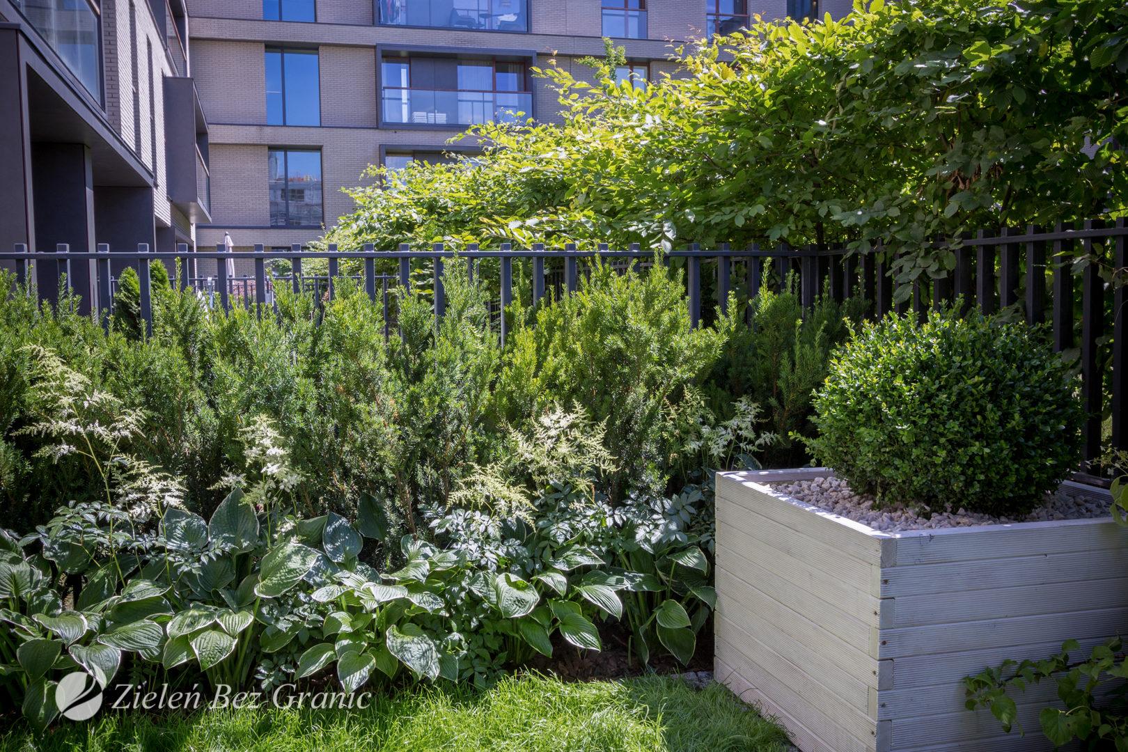 Zielona oaza w miejskim ogrodzie przydomowym.