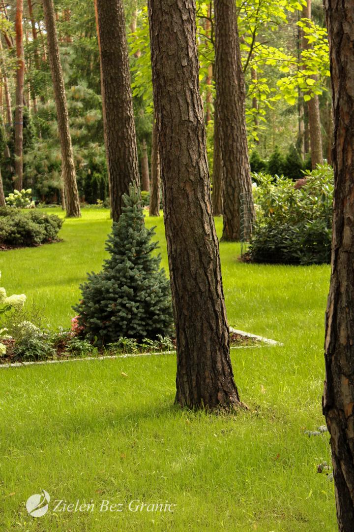 Leśny ogród przydomowy.