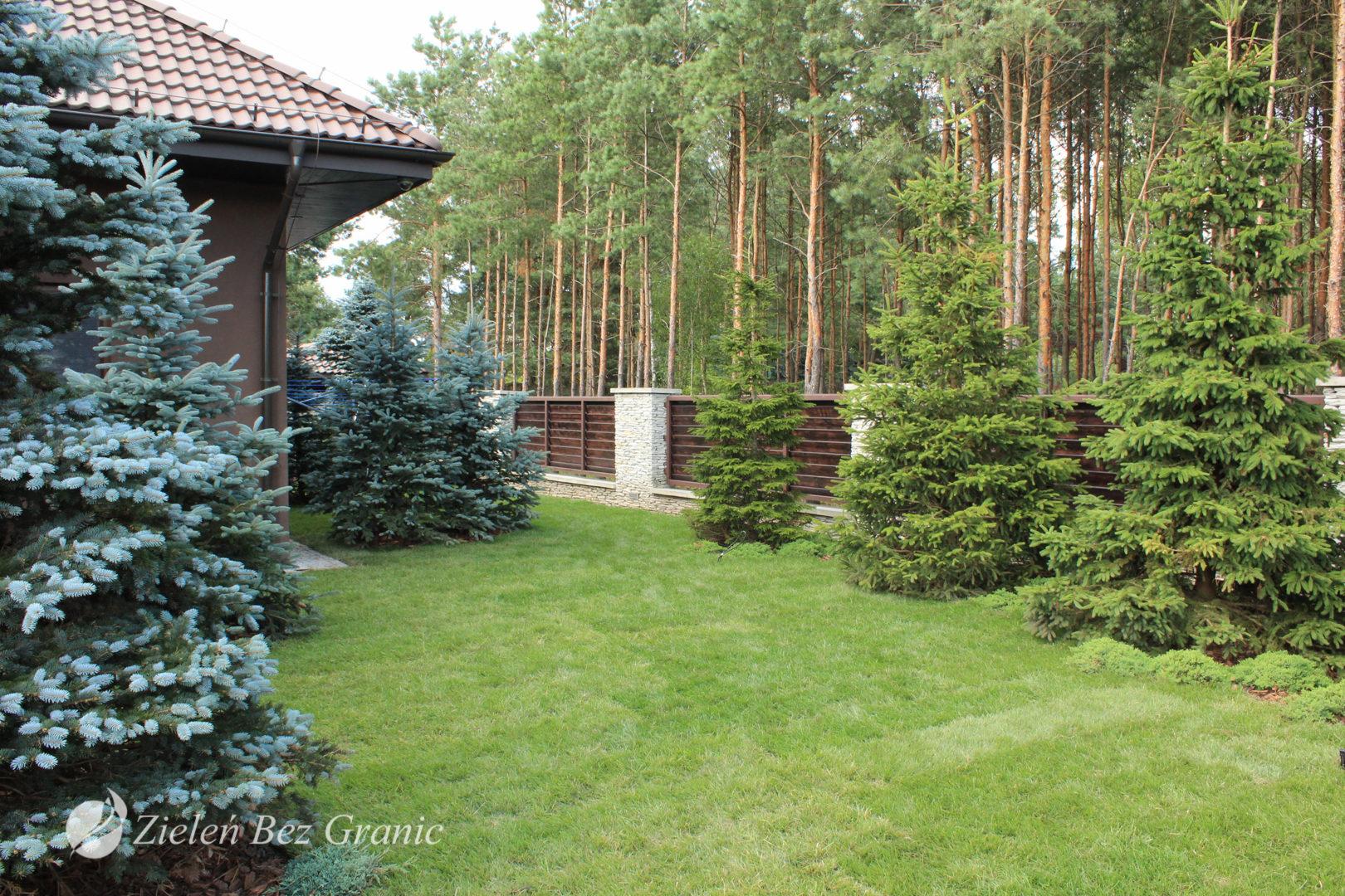 Leśny charakter ogrodu zapewniają drzewa iglaste.