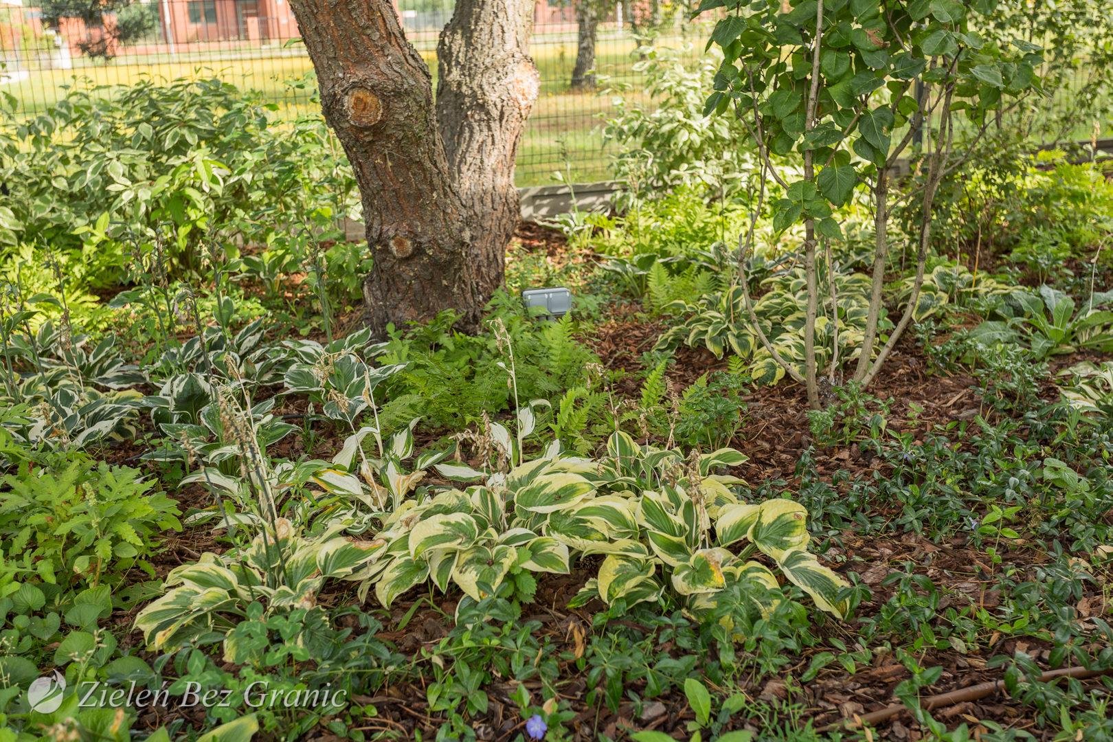 Leśny ogród przydomowy